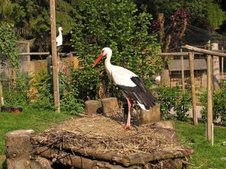 Vogelpark Schotten © Vogelpark Schotten