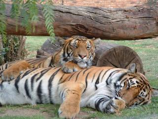 Lory Park Zoo © Lory Park Zoo